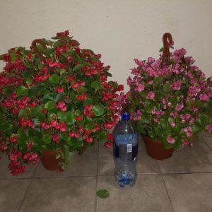 12-Цветущие